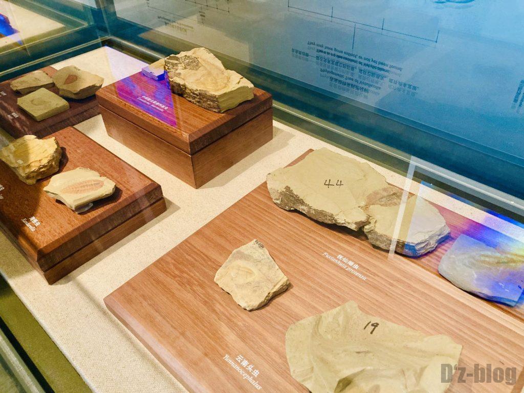 上海自然博物館登陸海内化石2