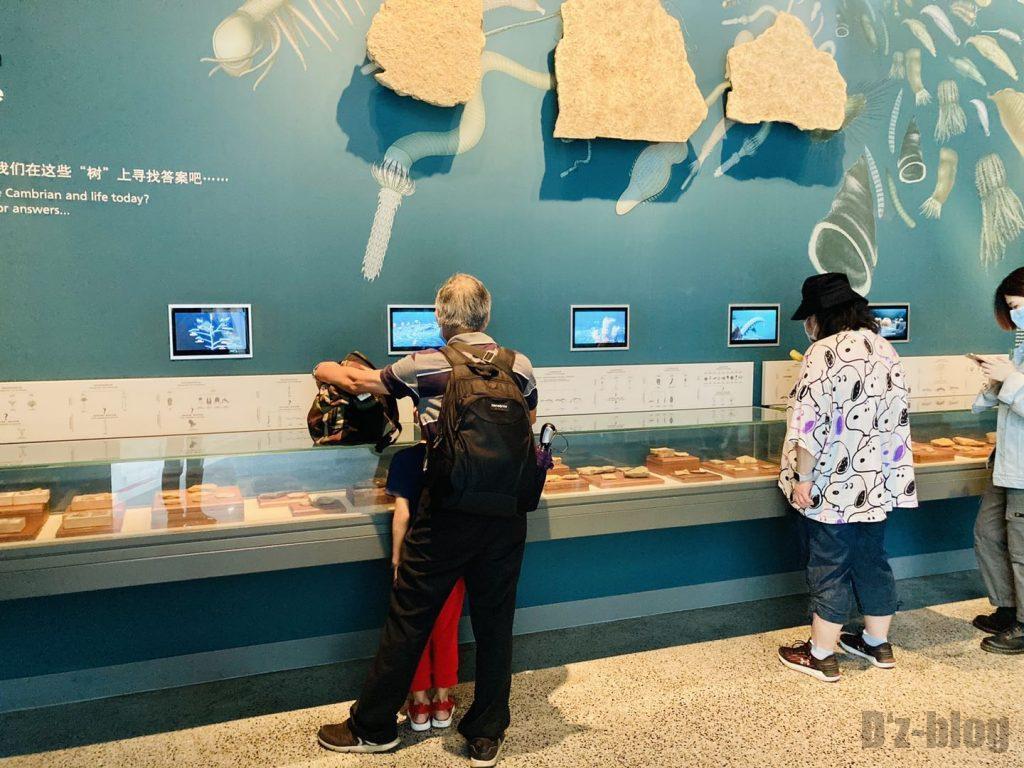 上海自然博物館登陸海内化石観覧