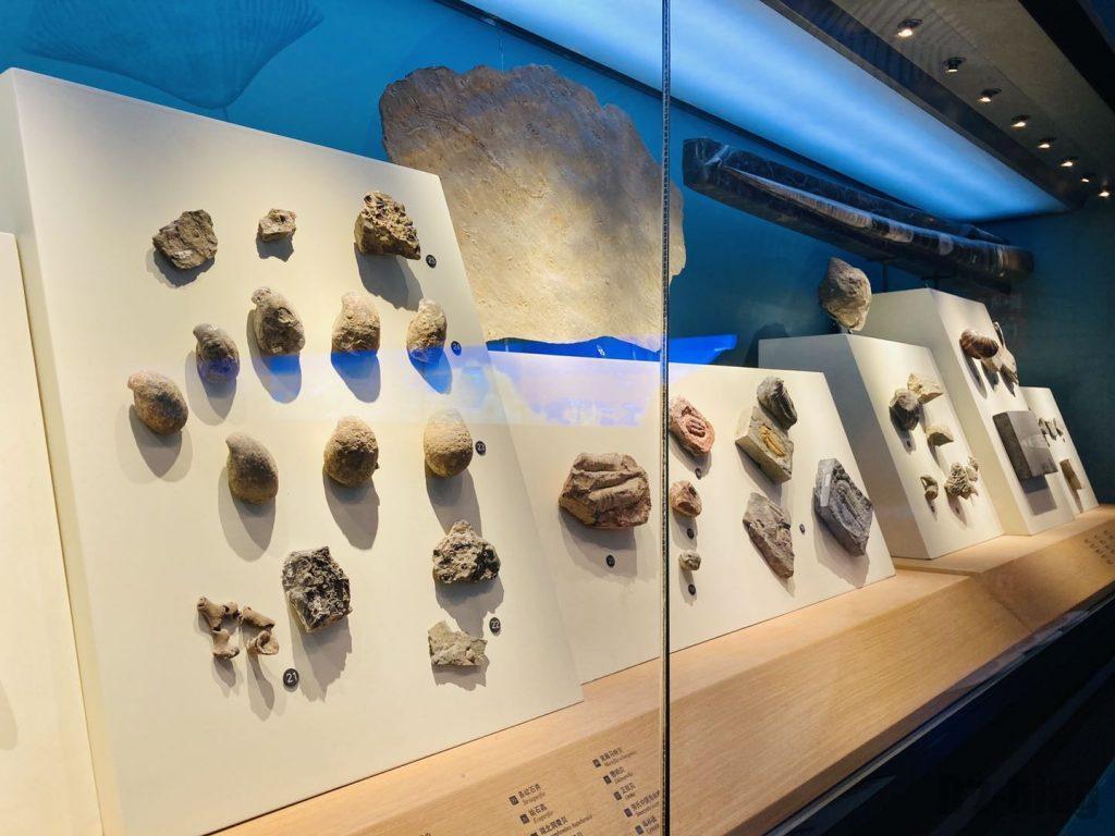 上海自然博物館海内化石陳列