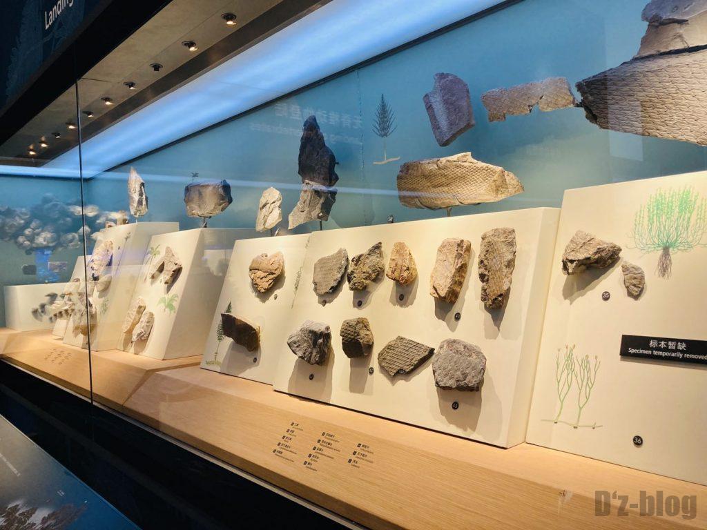 上海自然博物館海藻類化石