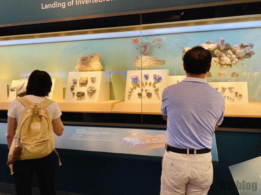 上海自然博物館海内生物観覧客