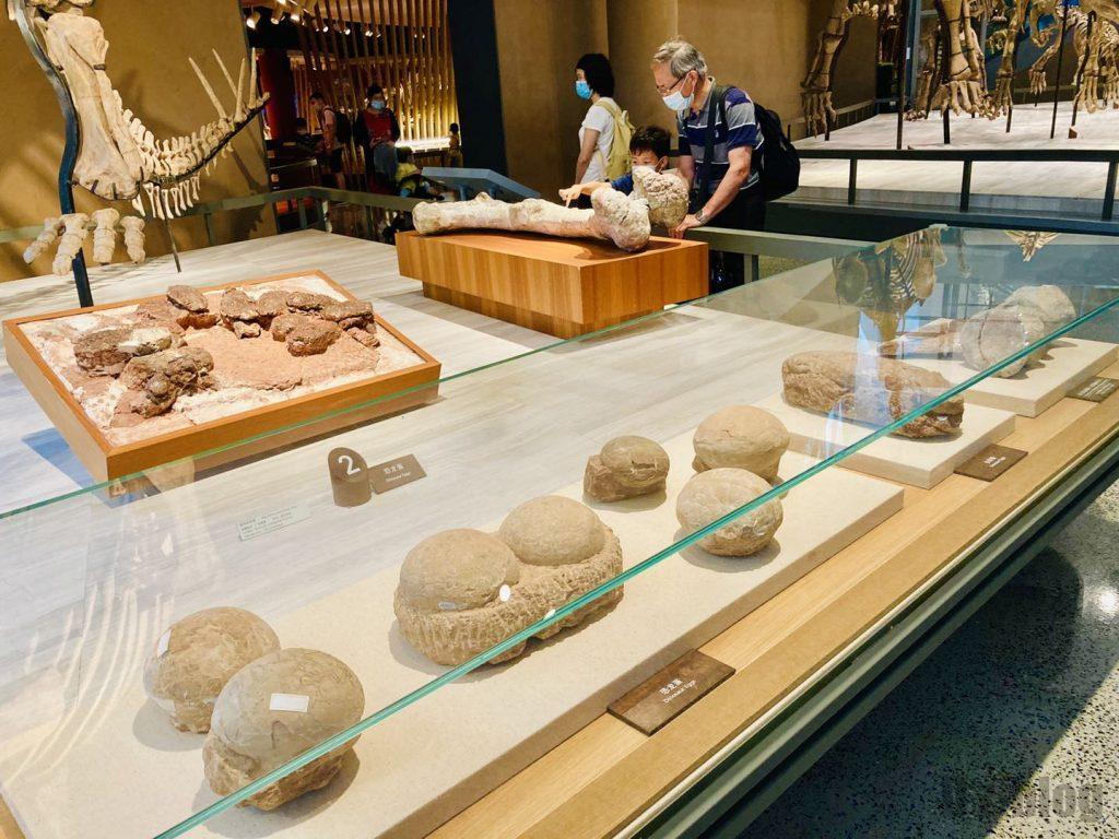 上海自然博物館恐竜の卵化石陳列