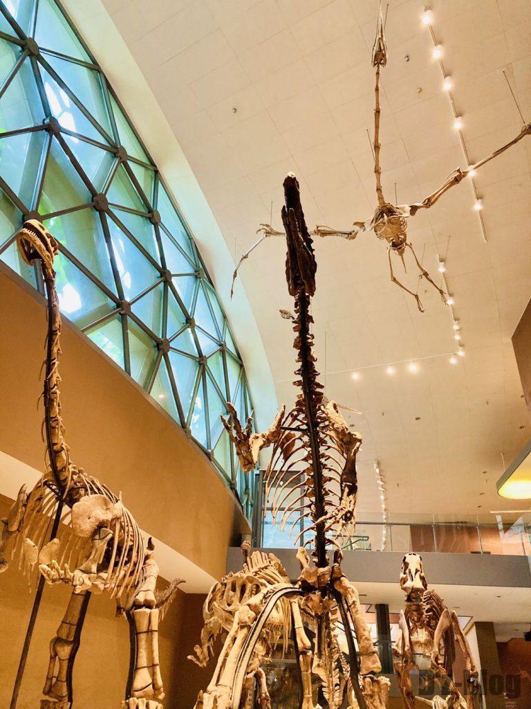 上海自然博物館恐竜全身化石アップ