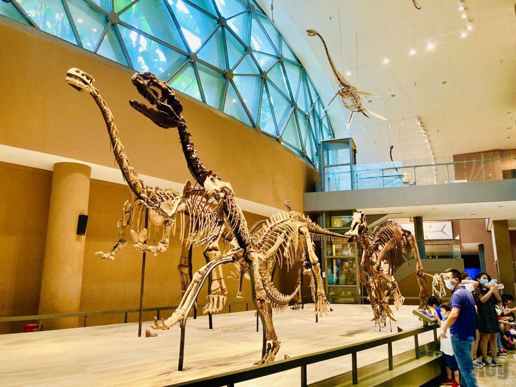 上海自然博物館恐竜全身化石歩行再現
