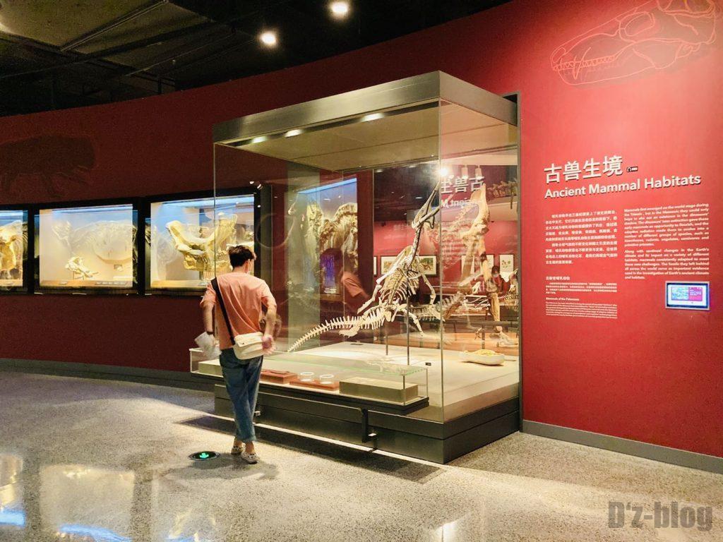 上海自然博物館恐竜全身化石遠方