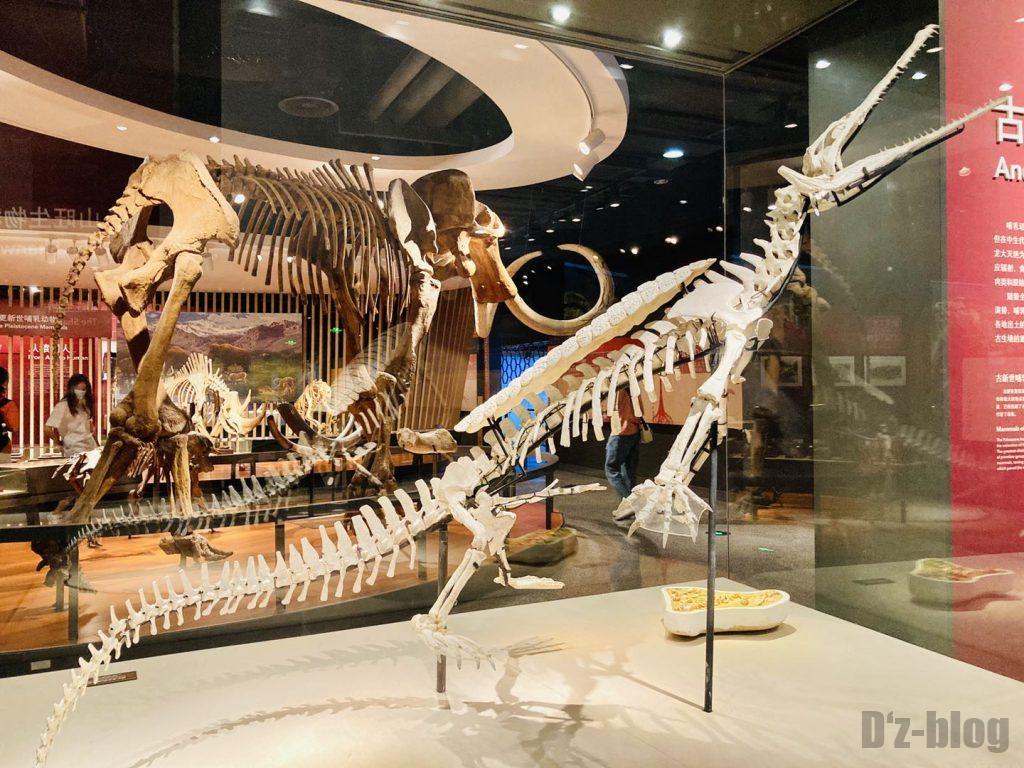 上海自然博物館恐竜全身化石3
