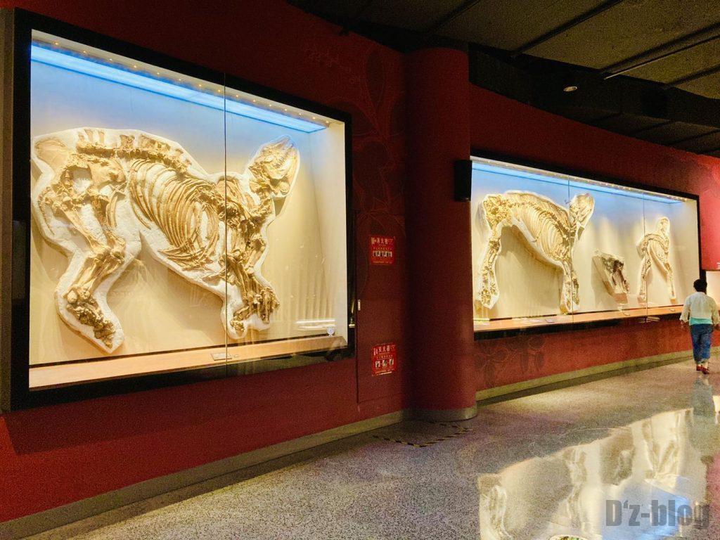 上海自然博物館恐竜全身化石展示