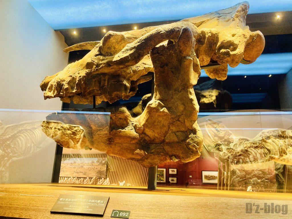 上海自然博物館恐竜巨大頭部化石