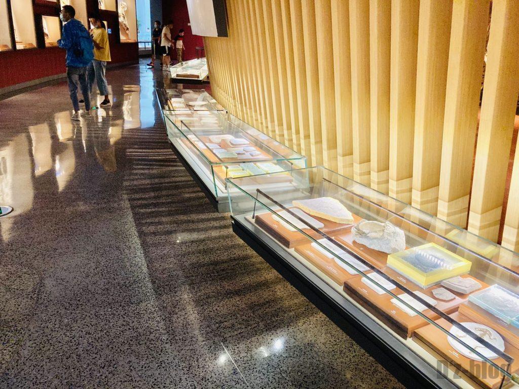 上海自然博物館恐竜時代化石展示