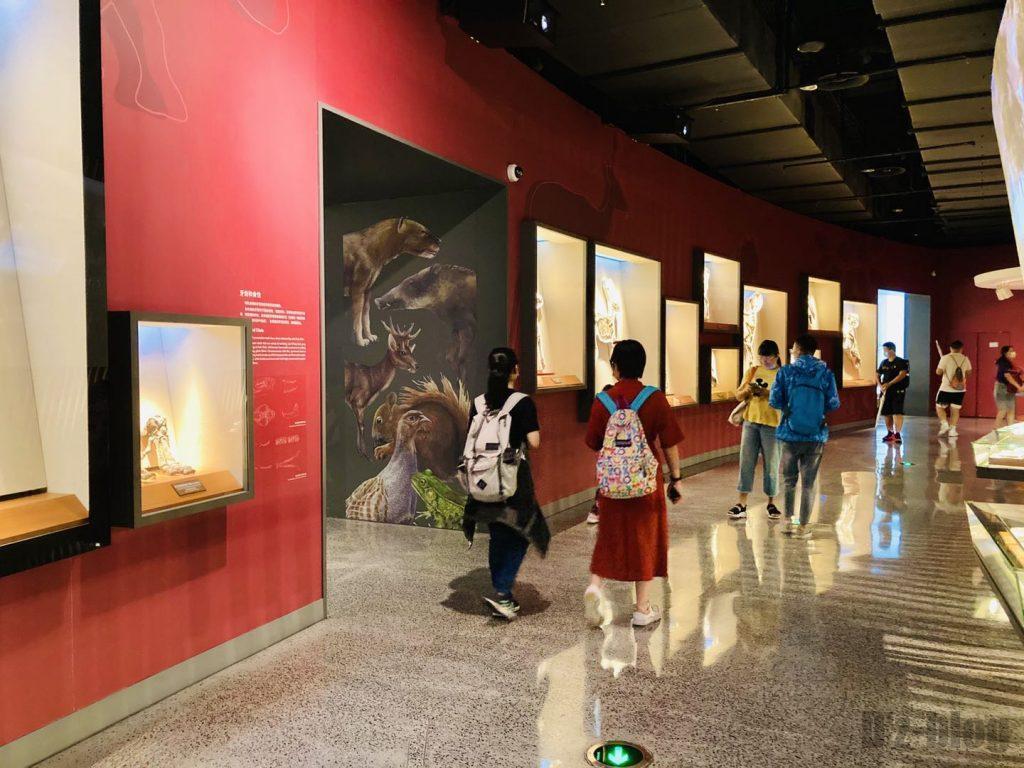 上海自然博物館恐竜化石展示通路