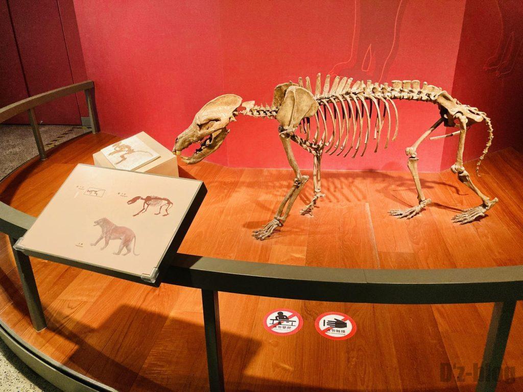 上海自然博物館恐竜全身化石