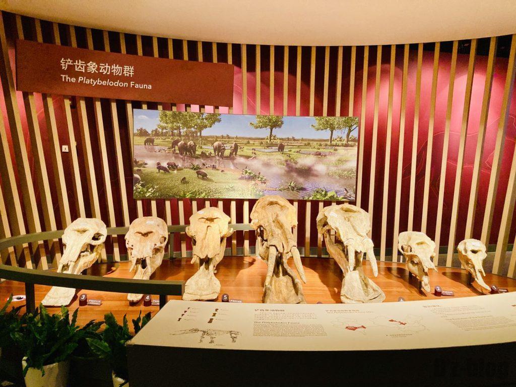 上海自然博物館恐竜時代牙像頭部陳列