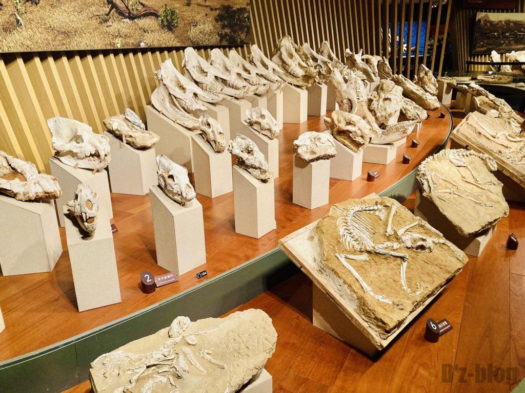 上海自然博物館恐竜時代化石頭部陳列