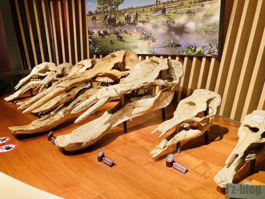 上海自然博物館恐竜時代像の頭部化石