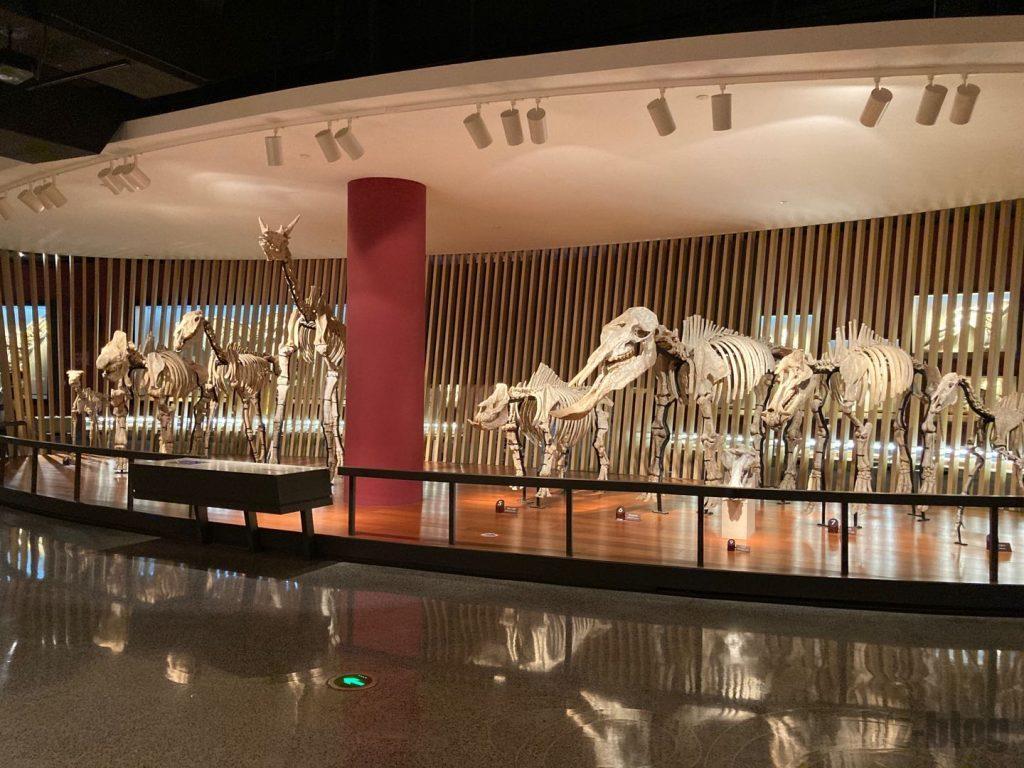 上海自然博物館恐竜全身化石集団