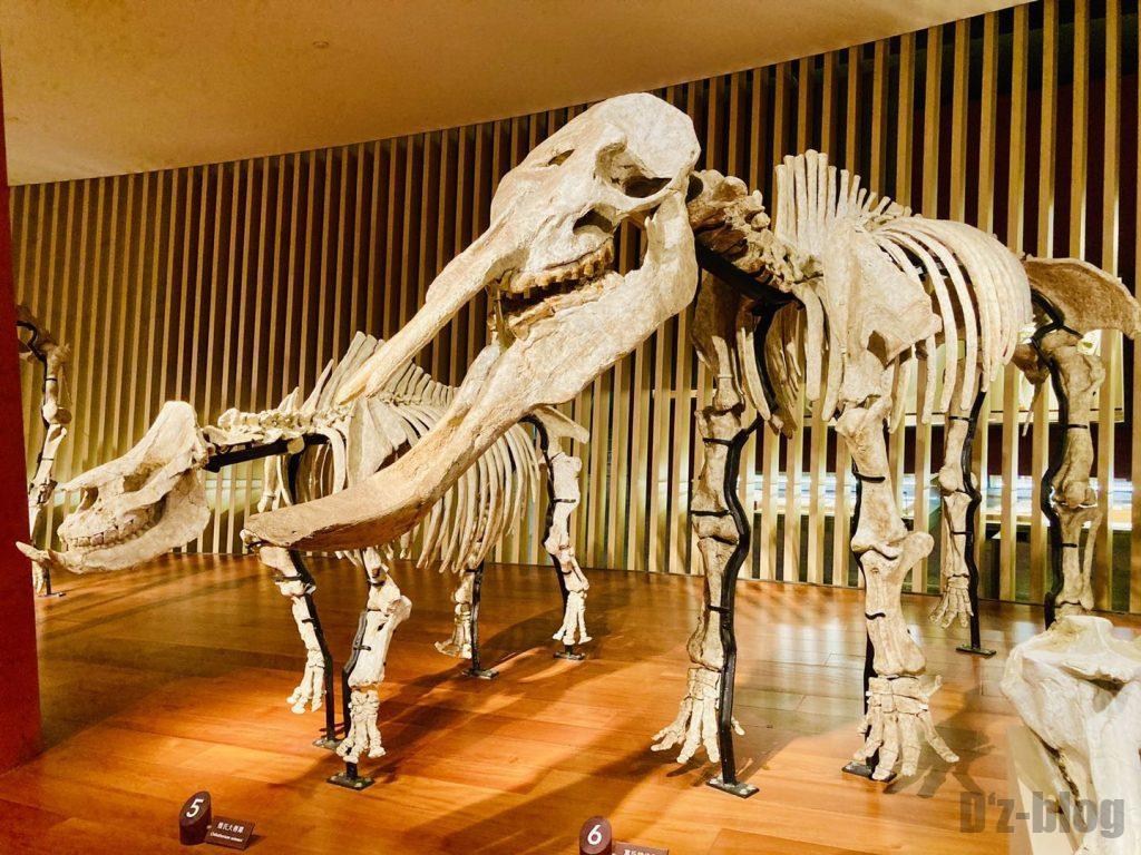 上海自然博物館牙像全身化石