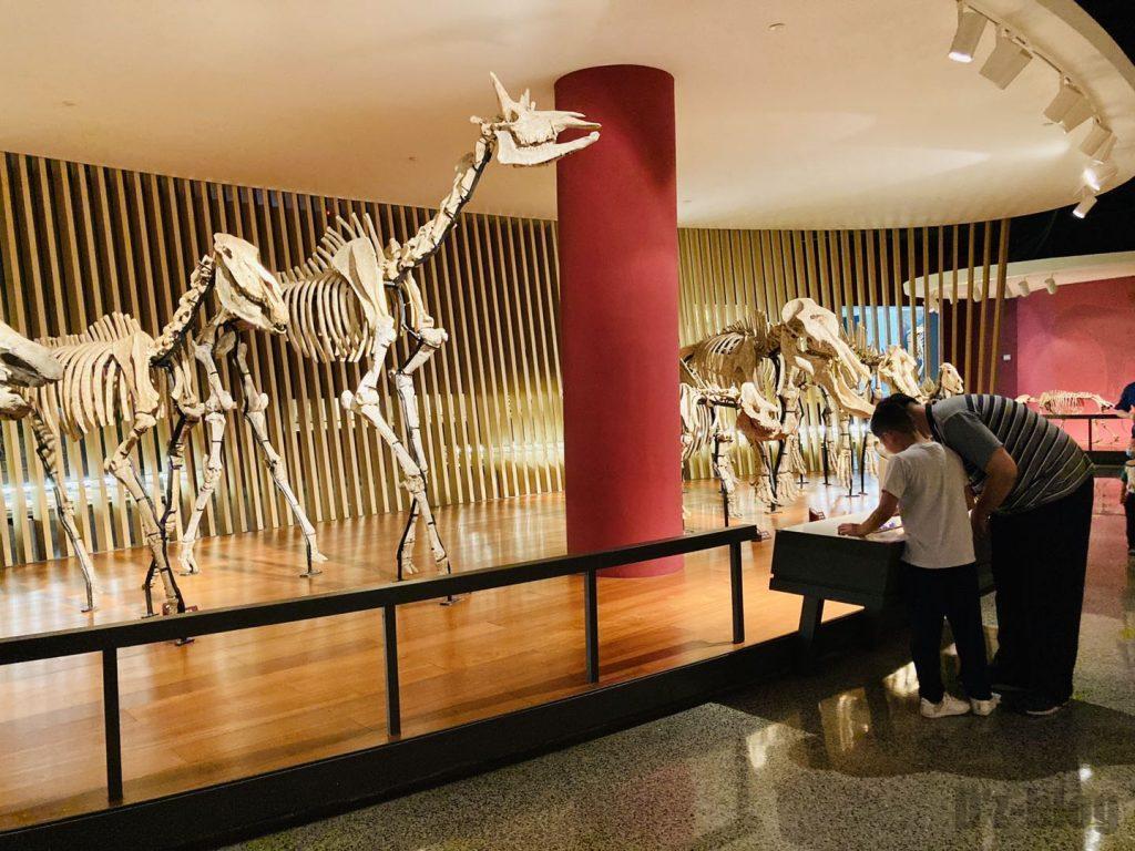上海自然博物館恐竜化石観覧親子