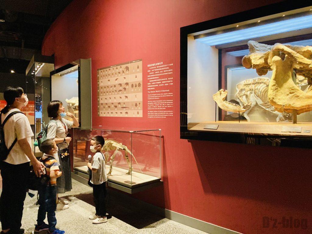 上海自然博物館生物の進化表観覧親子