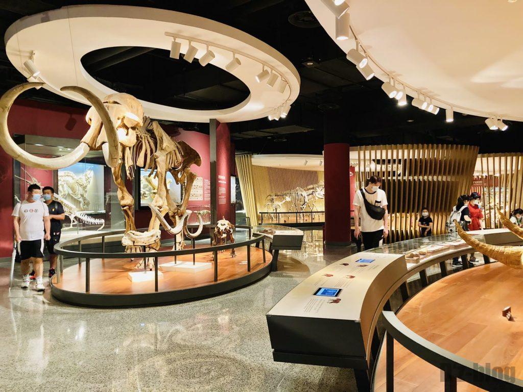 上海自然博物館大型牙像全身化石