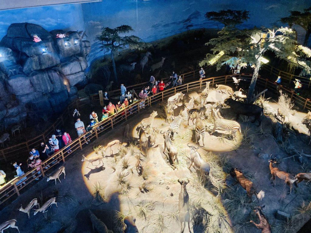 上海自然博物館野生動物生態見本