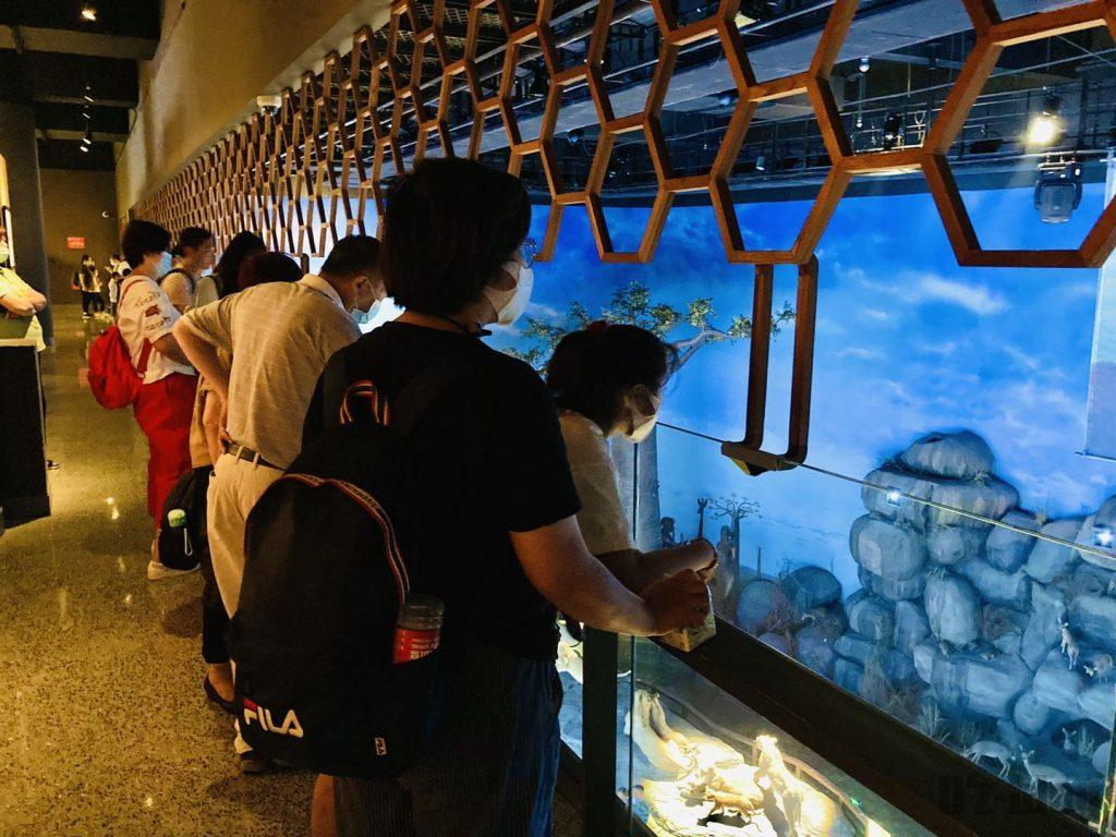 上海自然博物館野生動物生態モデル観覧客
