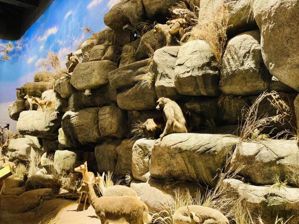 上海自然博物館さる