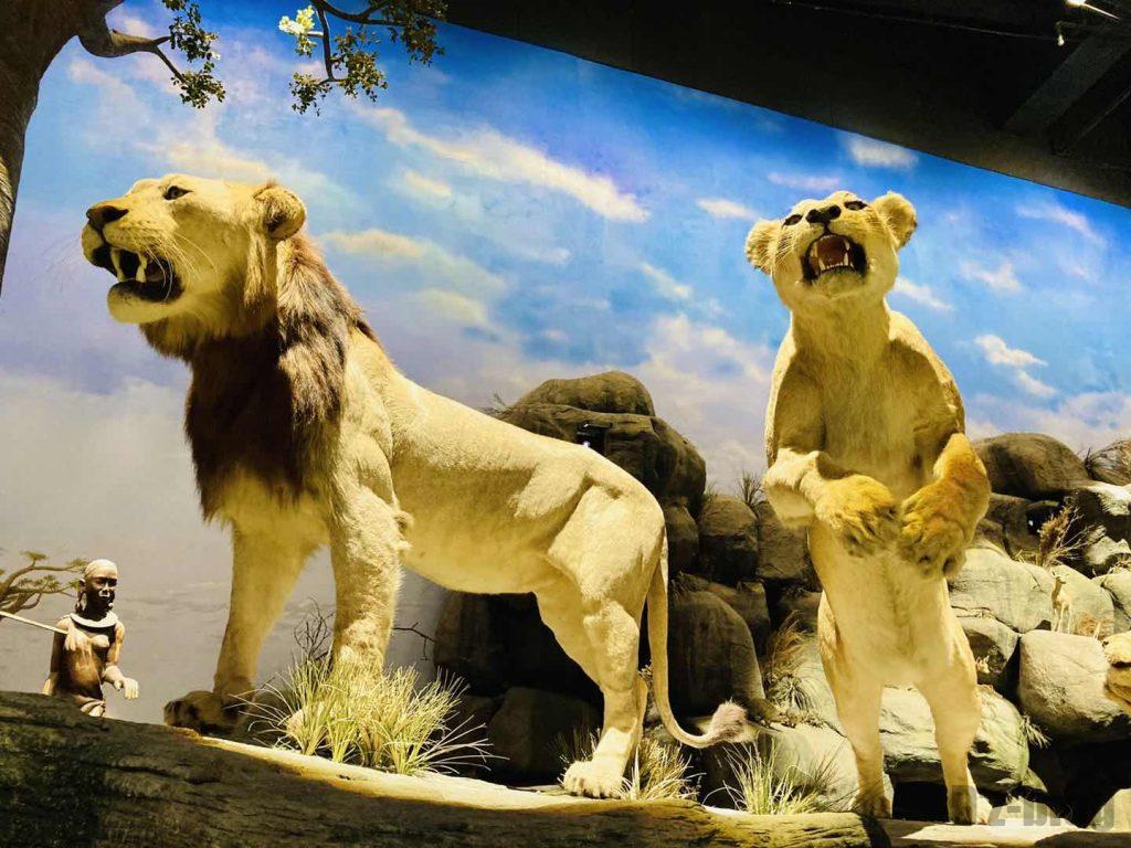 上海自然博物館ライオン夫婦
