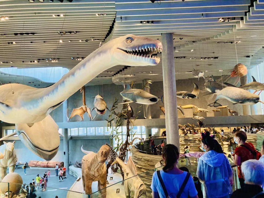 上海自然博物館巨大恐竜モデルアップ