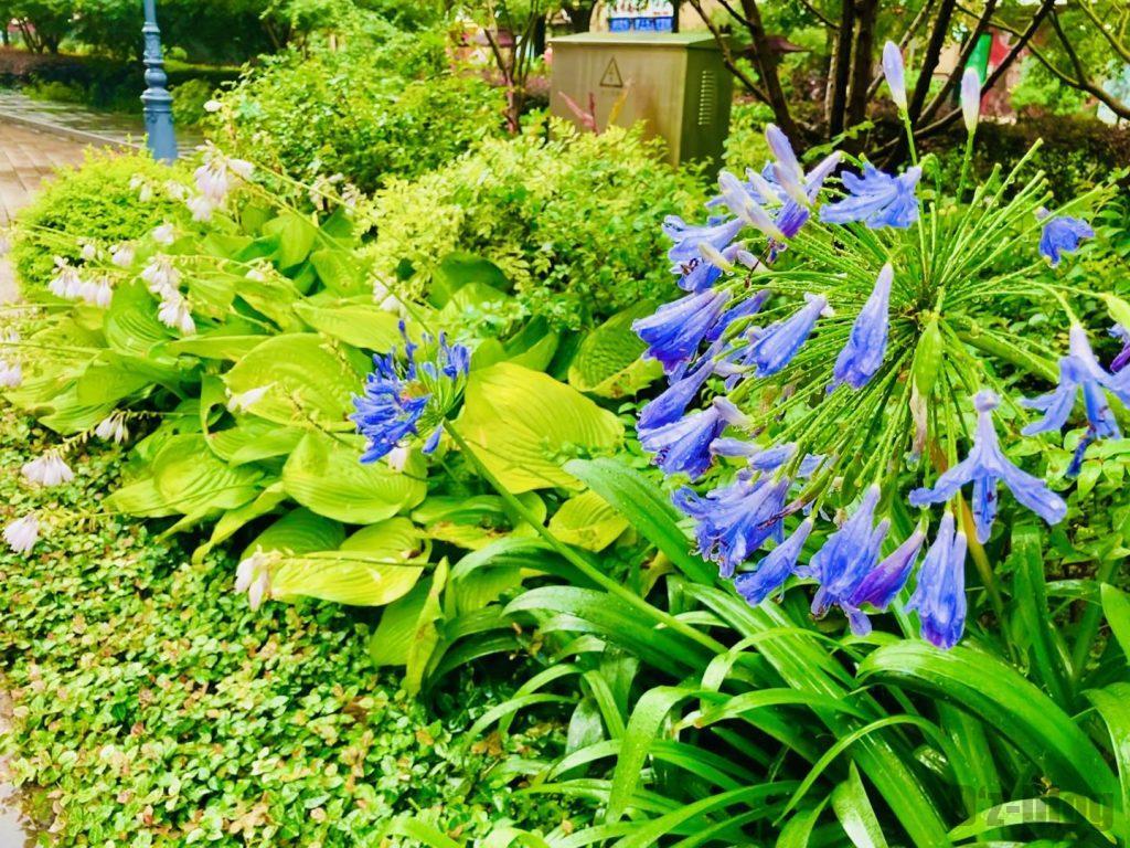 上海黄金城道街の花壇の花