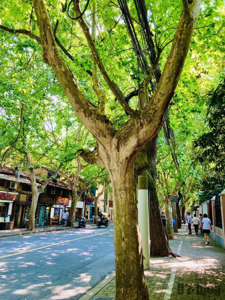 上海安福路並木道