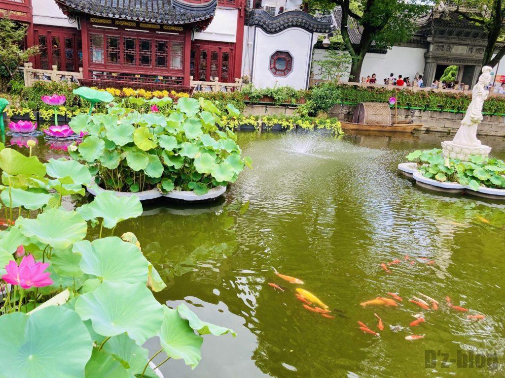 上海豫园ハスと鯉