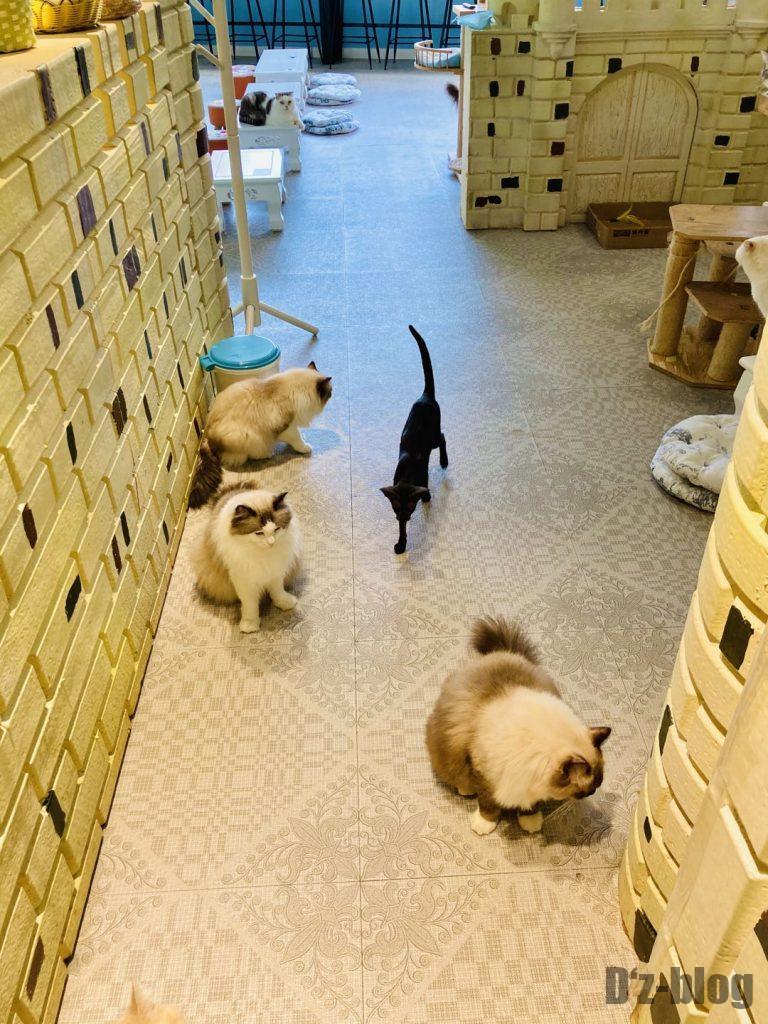 上海淇乐猫咪咖啡二階お出迎え