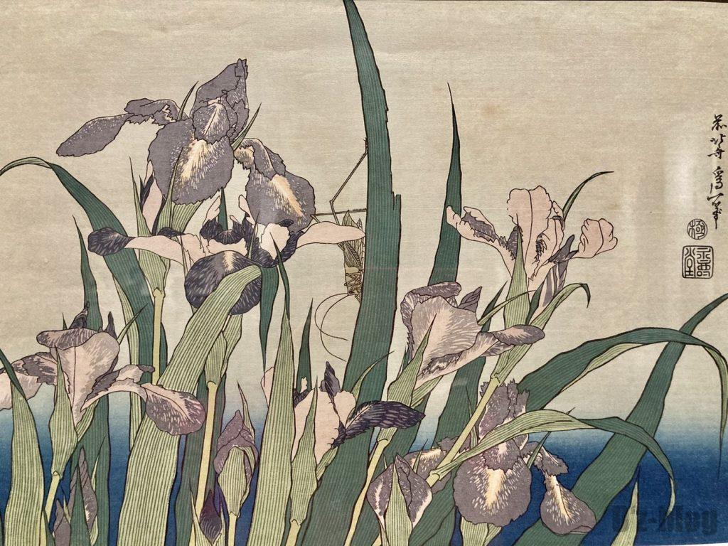 上海浮世絵菖蒲の花