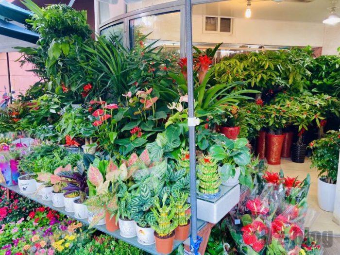 上海岚灵花鳥市場 花屋