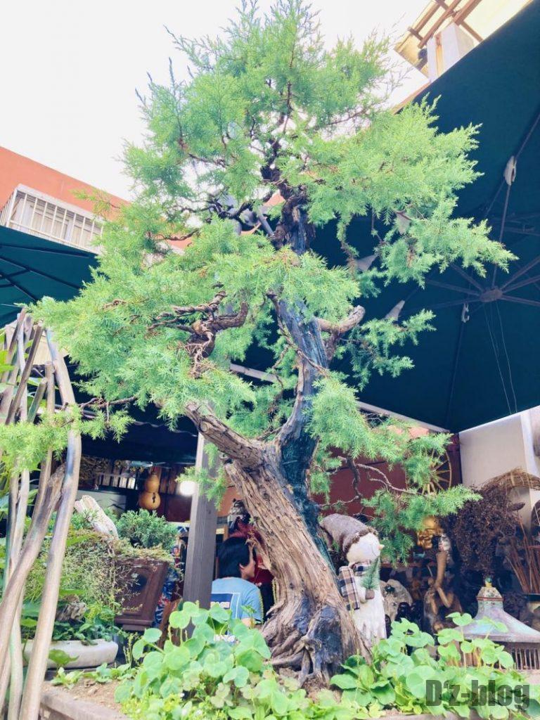 上海岚灵花鳥市場 盆栽
