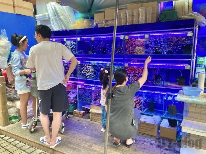 上海岚灵花鳥市場 水槽を見る親子