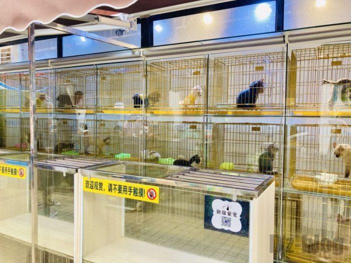 上海岚灵花鳥市場 ペットショップ