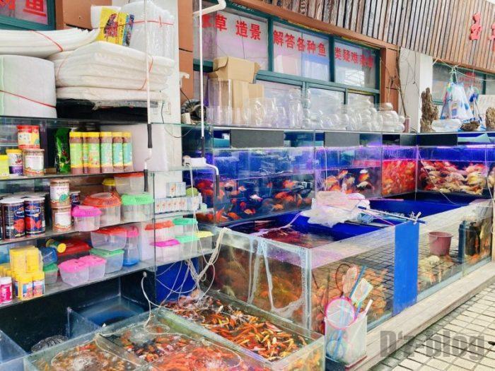 上海岚灵花鳥市場 金魚屋