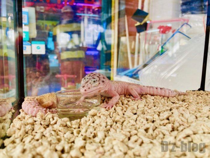 上海岚灵花鳥市場 トカゲ