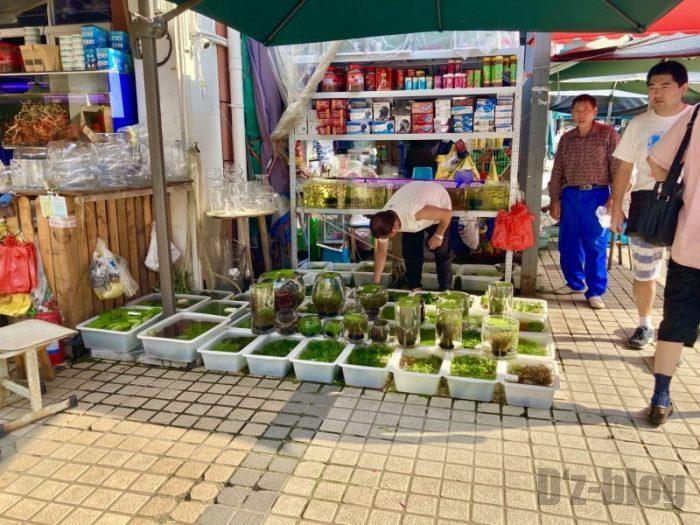 上海岚灵花鳥市場 路上販売