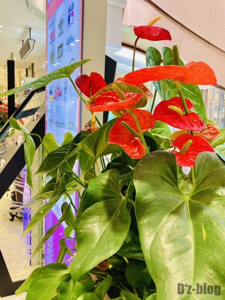 上海新世界大丸百貨店 館内生花