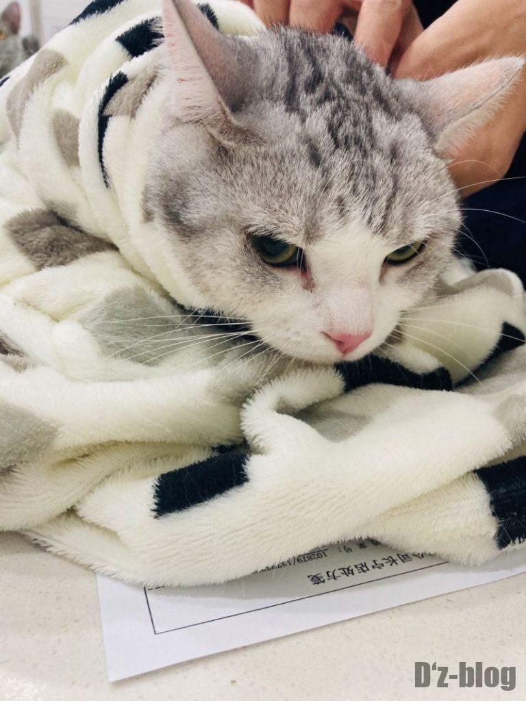 上海貝康動物医院 巻かれるハク