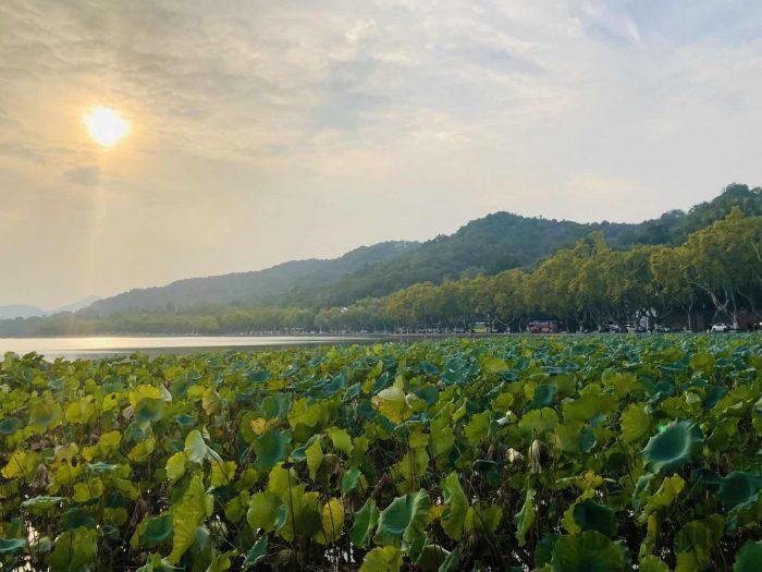 杭州西湖④