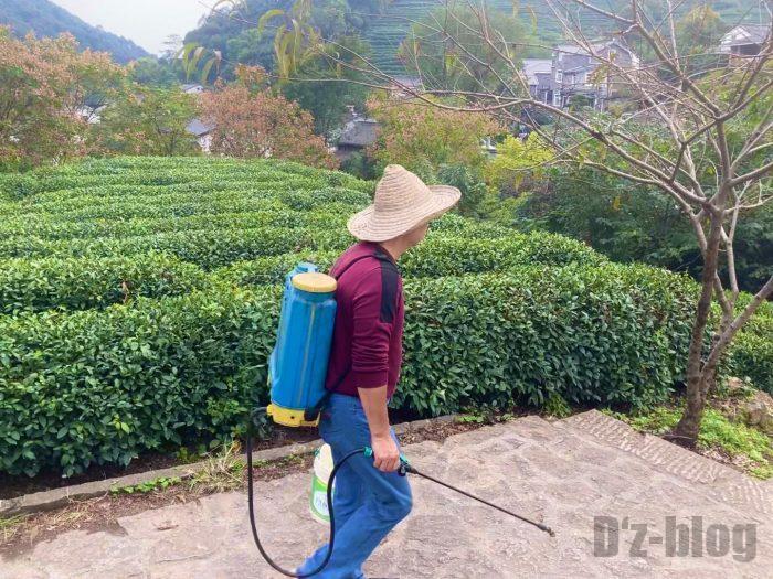 杭州龍井村お茶畑の世話をするおじさん