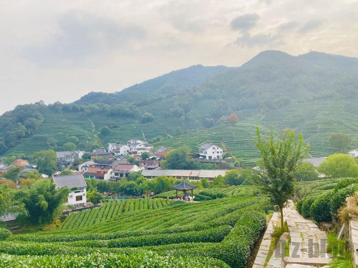 杭州龍井村お茶畑全体⑥