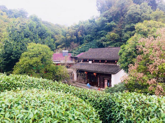 杭州龍井村上から見た村の景色②
