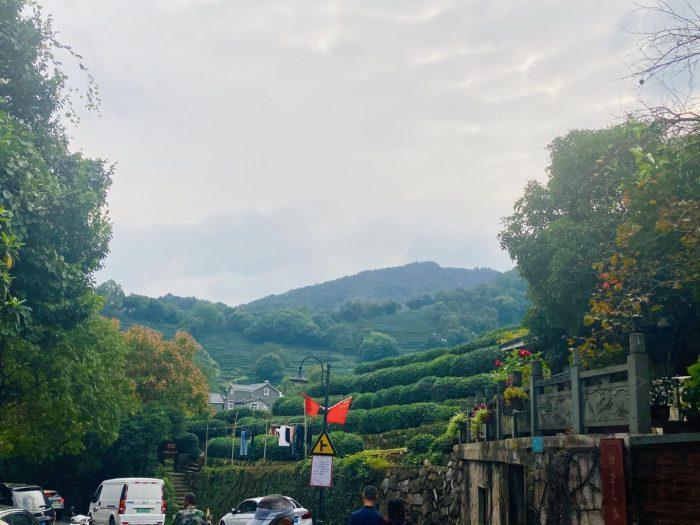 杭州龍井村道中から見える茶畑