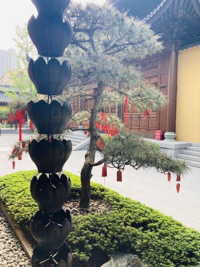 上海玉佛禅寺46